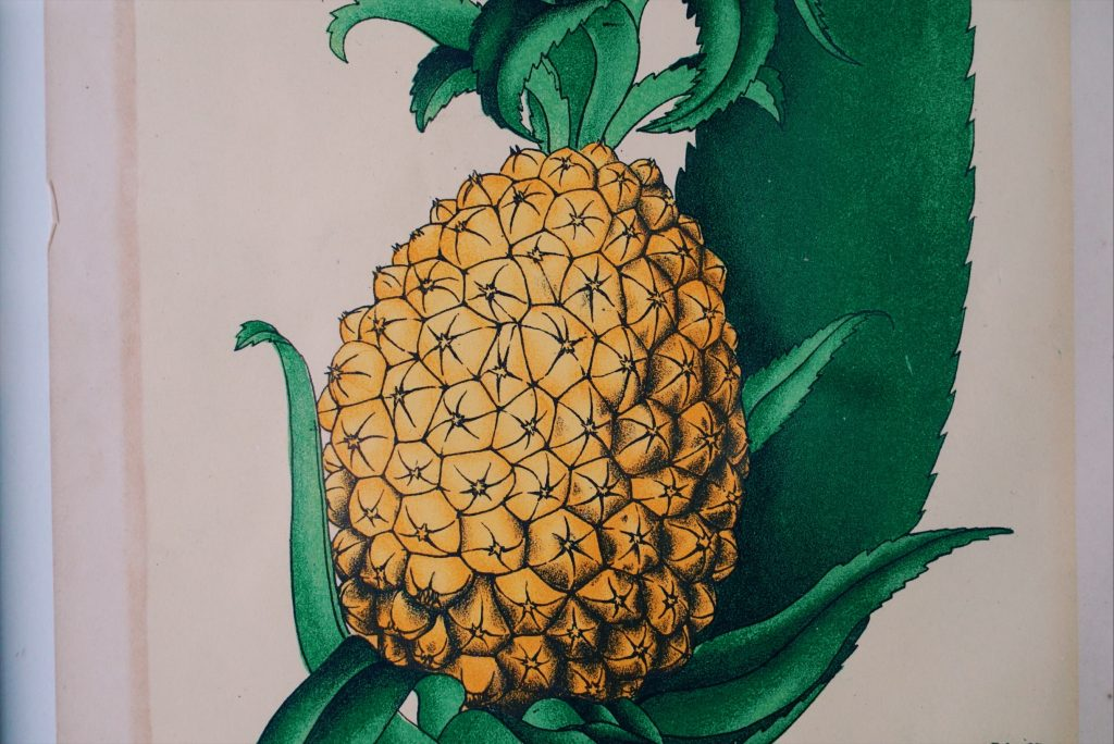 ボタニカルアート パイナップル