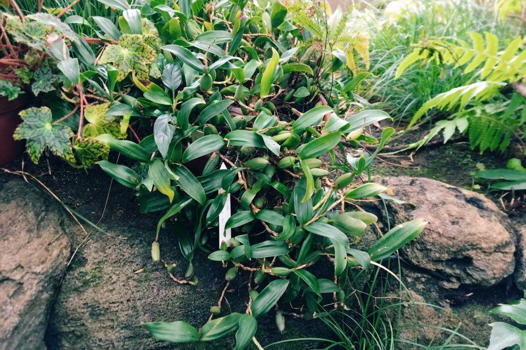 板橋区熱帯環境植物館