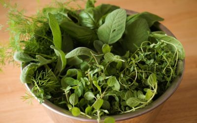 herb-top2